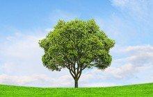 The Arbor Effect